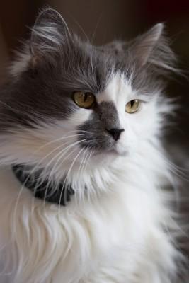 Katze Side