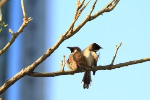 Verdächtiger beobachtet Vögel